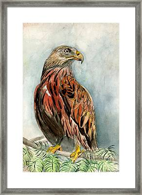 Red Eagle Framed Print by Genevieve Esson