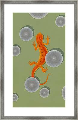 Red Eft Newt Framed Print by Nathan Marcy