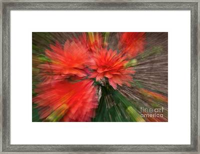 Red Explosion Framed Print