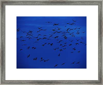 Red Eye Flight Framed Print by Todd Sherlock