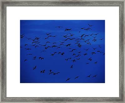 Red Eye Flight Framed Print by Todd Sherlock