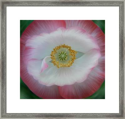 Framed Print featuring the photograph Red Eye Poppy by Barbara St Jean