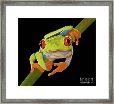 Red Eye Tree Frog Framed Print by Susan Candelario