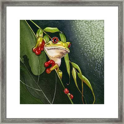 Red-eyed Frog Framed Print