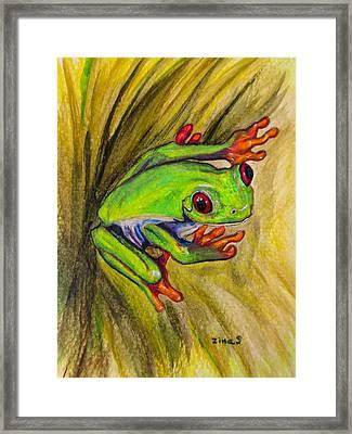 Red Eyed Frog Framed Print by Zina Stromberg