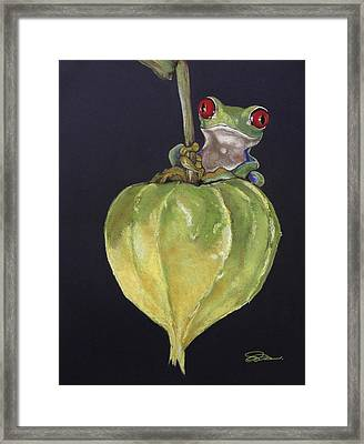 Red-eyed Tree Frog On Seed Pod Framed Print