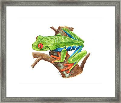 Red-eyed Treefrog Framed Print by Cindy Hitchcock