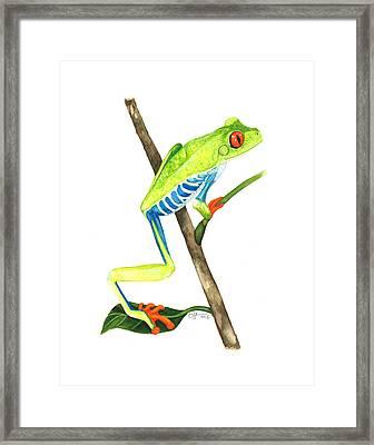 Red-eyed Treefrog From La Selva Framed Print