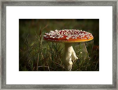 Red Fairy Mushroom Framed Print by Shirley Mitchell
