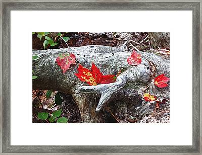 Red Fall Against Grey Framed Print