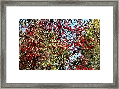 Red Fall Foliage Framed Print by Tina M Wenger