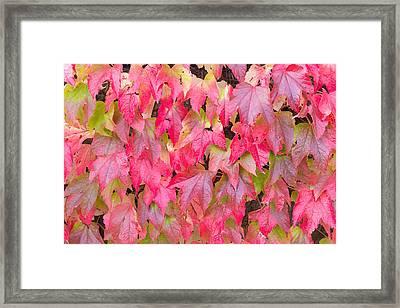 Red Fall Framed Print
