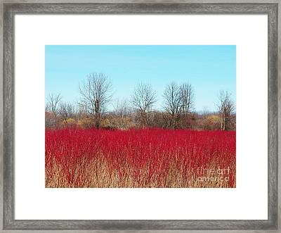 Red Fields Framed Print by Judy Via-Wolff