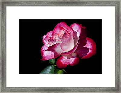 Framed Print featuring the photograph Red Flame by Doug Norkum