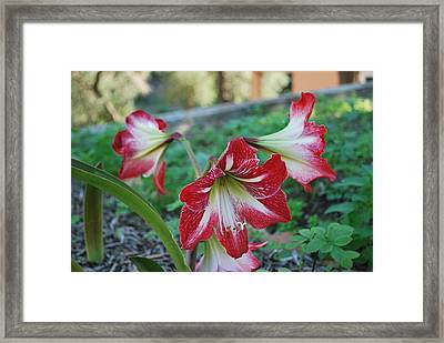 Red Flower 1 Framed Print by George Katechis