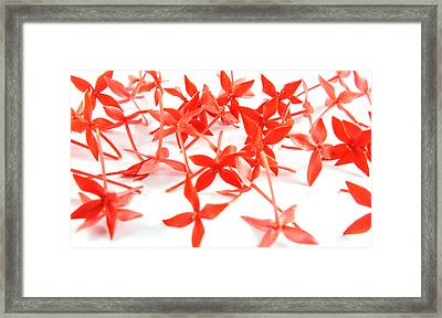 Red Flower Background Framed Print by Aged Pixel