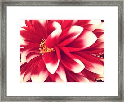 Red Flower Framed Print by Beril Sirmacek