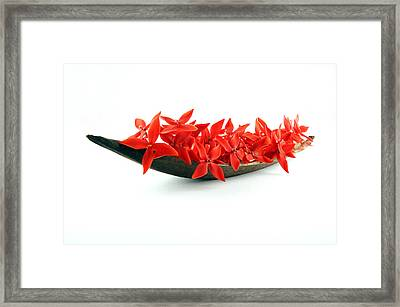 Red Flower Boat Framed Print