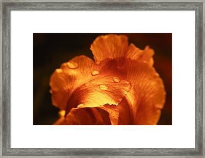 Red Flower Closeup Framed Print by Vlad Baciu