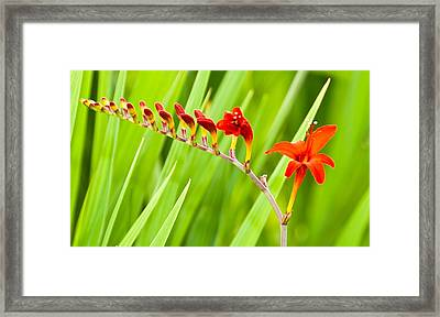 Red Flower Family Framed Print by Dee Dee  Whittle