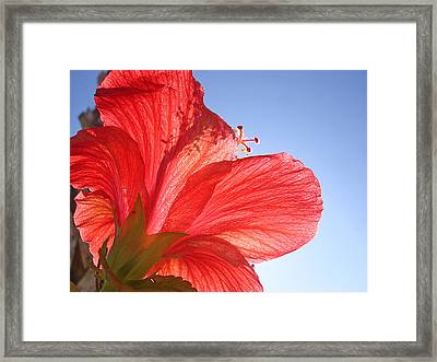 Red Flower In The Sun By Jan Marvin Studios Framed Print