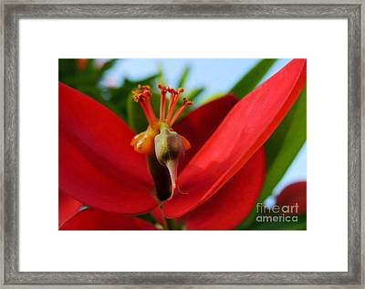 Framed Print featuring the photograph Red Flower by Kristine Merc