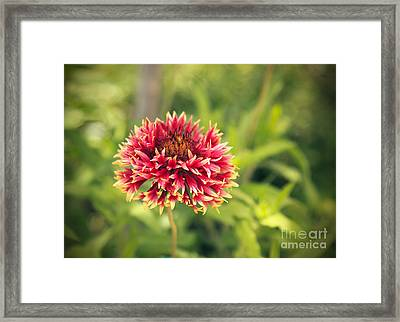 Framed Print featuring the photograph Red Flower by Mohamed Elkhamisy