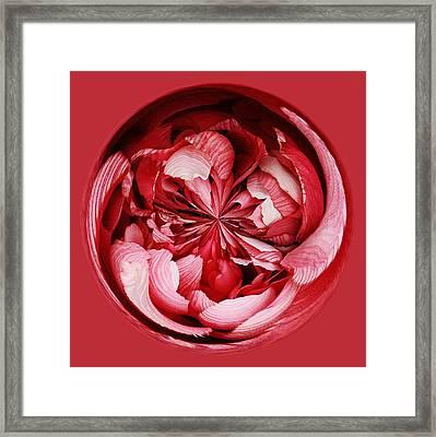 Red Flower Orb Framed Print by Paulette Thomas