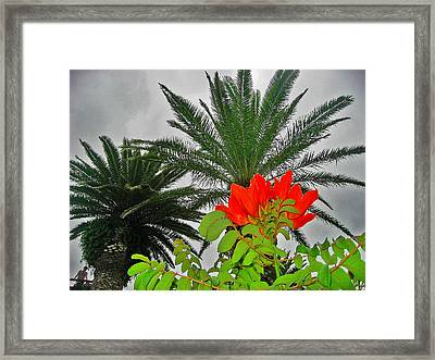 Red Flower. Palma. Canary Islands. Framed Print by Andy Za