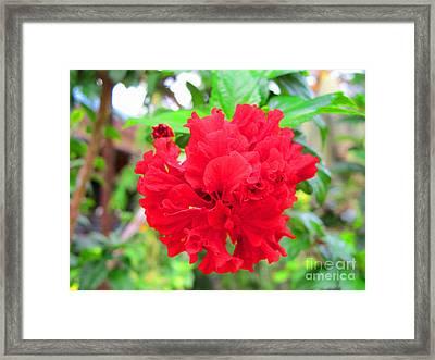 Red Flower Framed Print by Sergey Lukashin