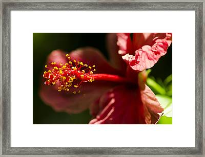 Red Flower Framed Print