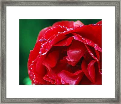 Red Flower Wet Framed Print by Matt Harang