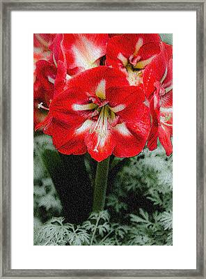 Red Flower With Starburst Framed Print by Crystal Wightman