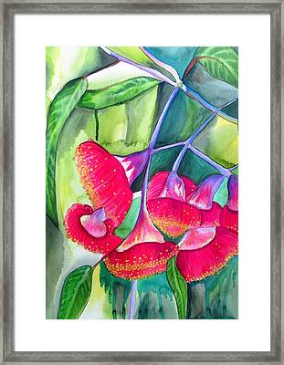 Red Flowering Gumnuts Framed Print by Sacha Grossel