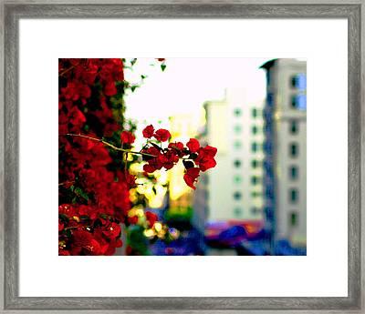 Red Flowers Downtown Framed Print by Matt Harang