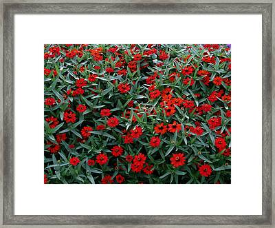 Red Flowers Framed Print by Eva Csilla Horvath