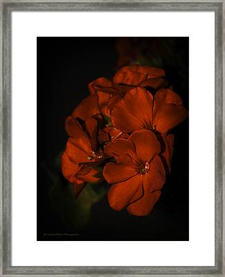 Framed Print featuring the photograph Red Flowers In Evening Light by Lucinda Walter