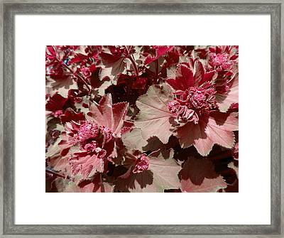 Framed Print featuring the photograph Red Flowers by Laurie Tsemak