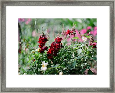 Red Flowers On Film Framed Print by Linda Unger