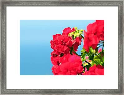 Red Flowers Framed Print by Paul Van Baardwijk