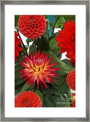 Red Flowers Framed Print by Robert Preston
