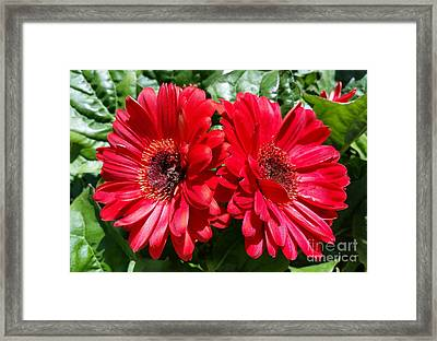 Framed Print featuring the photograph Red Flowers by Rose Wang