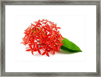 Red Flowers With Green Leaf Framed Print by Aged Pixel