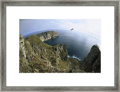 Red-footed Booby And Swallow-tailed Framed Print by Tui De Roy