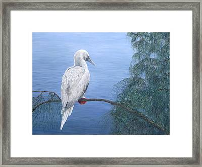 Red-footed Booby Framed Print by Dorothea Hyde