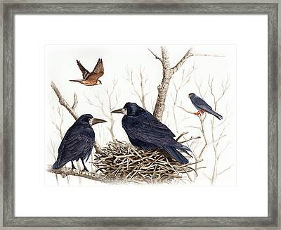 Red-footed Falcon Framed Print by Deak Attila