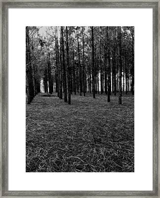 Red Forest In Black And White Framed Print