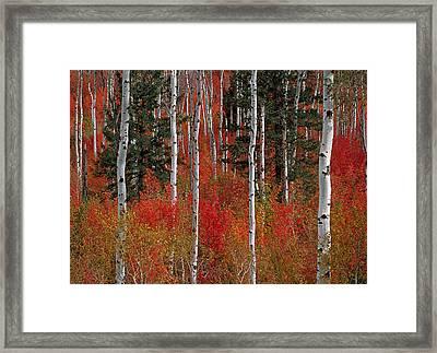 Red Forest Framed Print by Leland D Howard