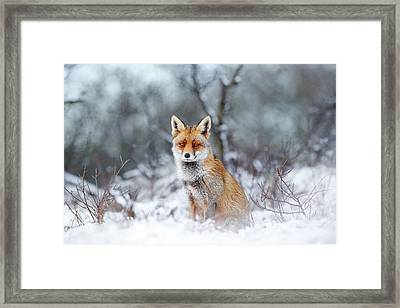 Red Fox Blue World Framed Print by Roeselien Raimond