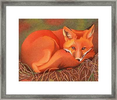 Red Fox Framed Print by Dan Miller